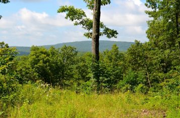 112 +/- Acre Recreational Property & Timber Ground For Sale
