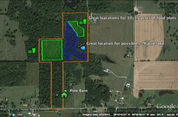 40 +/- Acre Southern Illinois Hunting Land for Sale