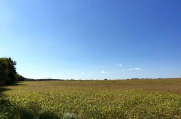 Pike County 140 +/- Acre Recreational Income Producing Tract