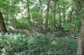Vacant 1.24 +/- Acre Lot for Sale in Cave in Rock Illinois