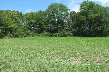 Northeast Missouri Tillable Land for Sale, Randolph County