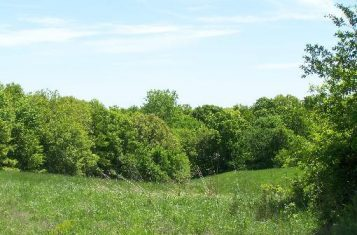 All Timber Recreational Tract for Sale near Milan Missouri