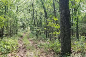 278 +/- Acre Prime Central Missouri Hunting Ground for Sale