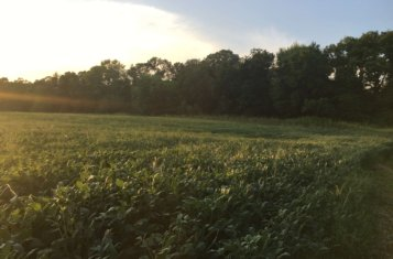 Illinois Land for Sale with Excellent Income – Bond County
