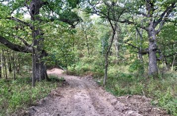 Pike County Missouri 64 +/- Acre Hunting Farm for Sale