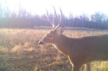 Saline County IL 87 +/- Acre Secluded Deer & Turkey Hunting Property for Sale