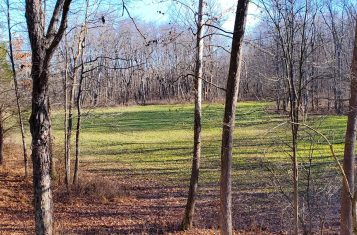 40 +/- Acre Secluded Illinois Land for Sale – Johnson County