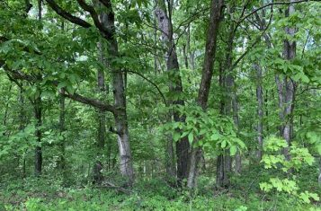 Pike County Missouri Hunting Tract for Sale