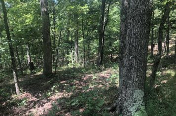 Secluded 42 +/- Acre Illinois Hunting Property for Sale – Pope County