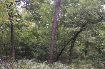 Vacant Illinois Land For Sale – Williamson County