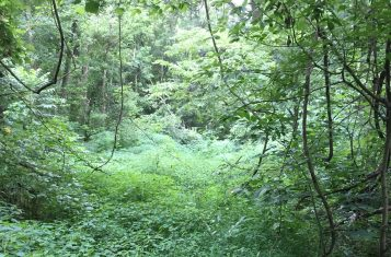 Illinois Mature Timber & Hunting Tract For Sale – Alexander County